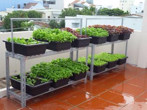 kệ sắt đa năng dùng trồng rau sạch, tự trồng rau ở ban công